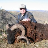 Arapawa wild ram hunting
